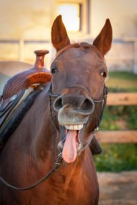 Funny Horse Stories / Jokes